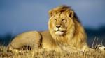 Características del león